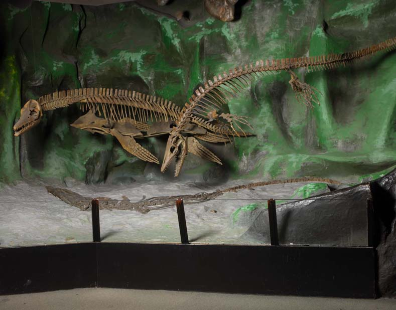 """mosasaur in """"old"""" gallery"""