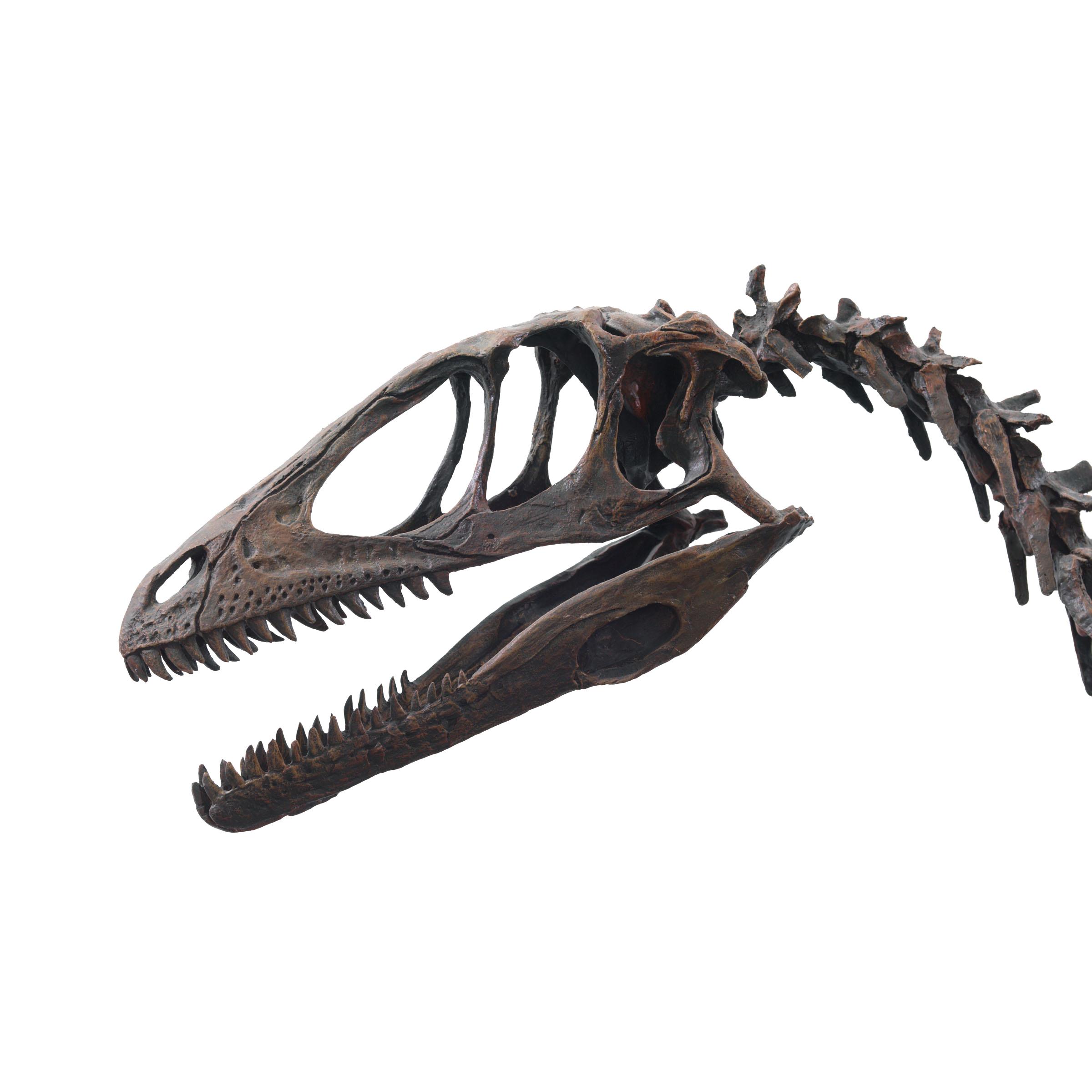 dinosaur skull silhouette