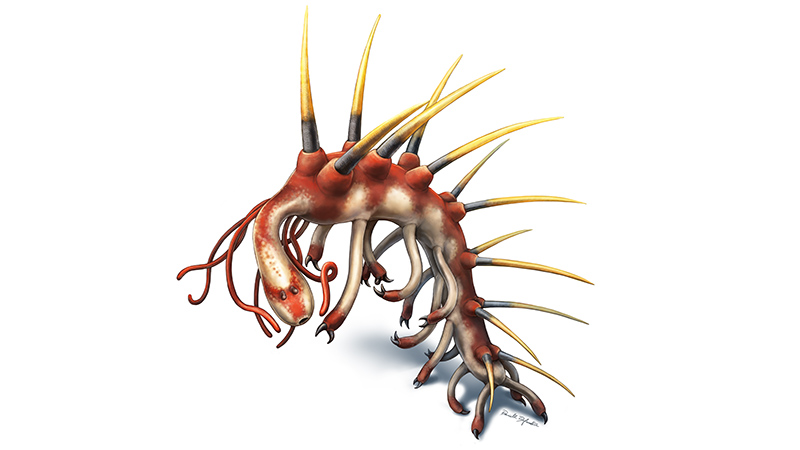 Illustration of Hallucigenia by Danielle Dufault