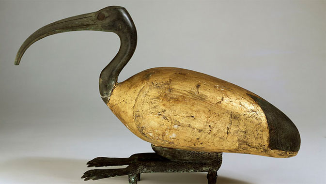 Egyptian ibis mummy