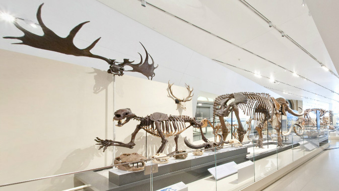 View inside the Reed Gallery of Mammals