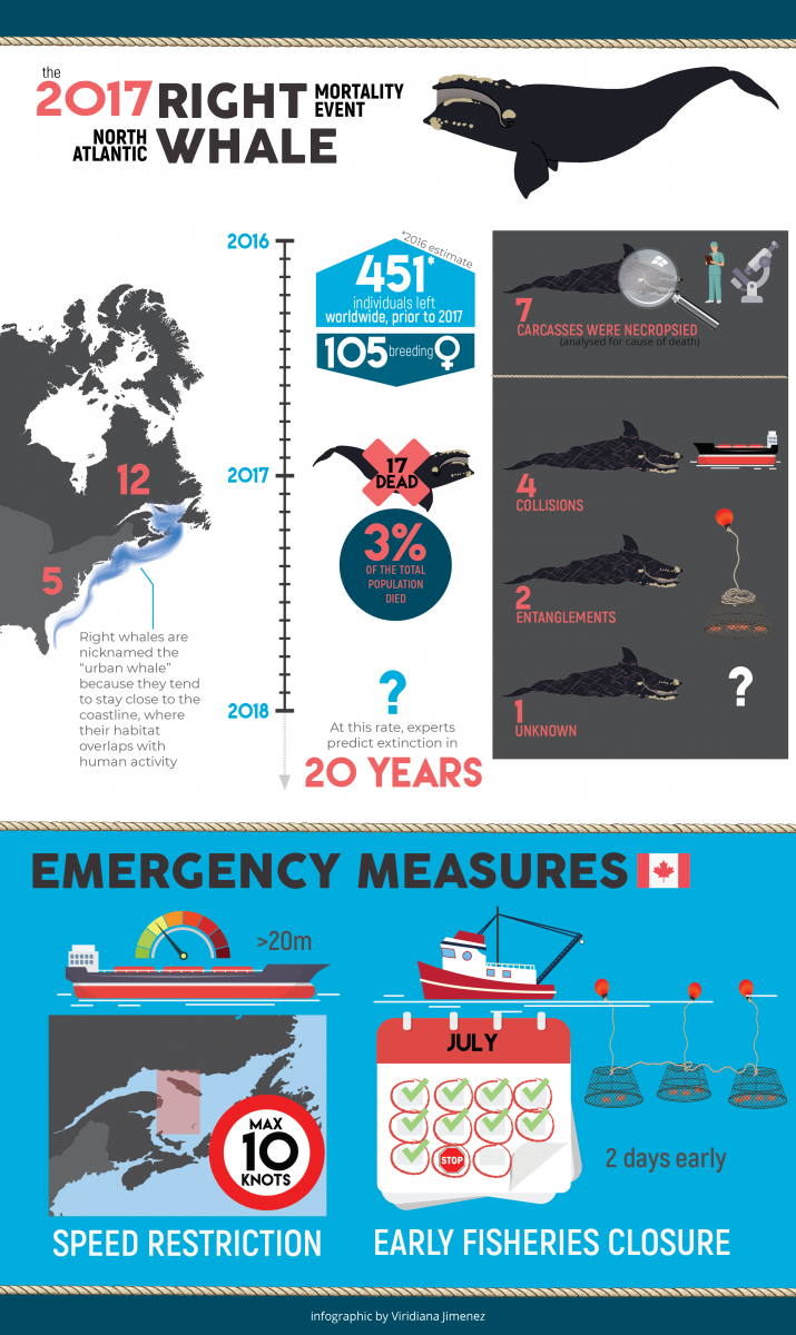 Causes of right whale mortality infographic