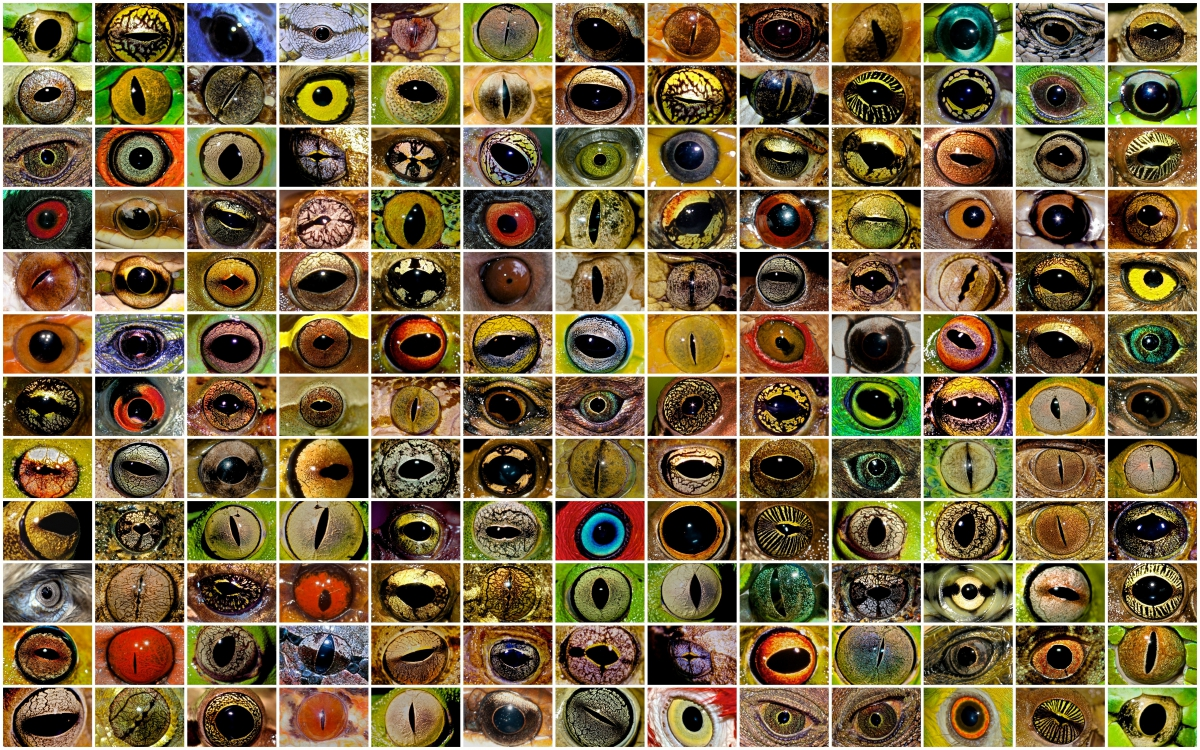 A mosaic of dozens of brightly colored animal eyes.