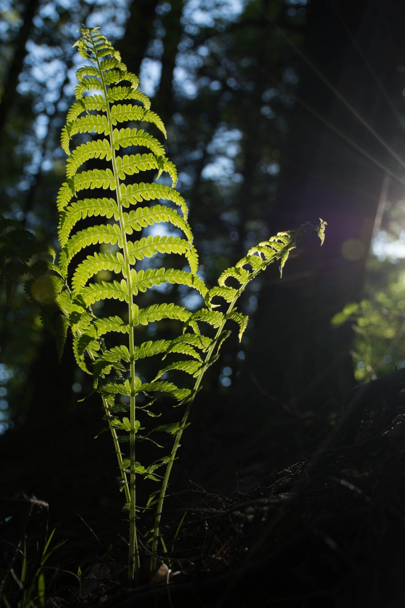A large, brightly lit fern frond