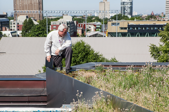 a man stands on the ROM's green roof looking at the plants it supports