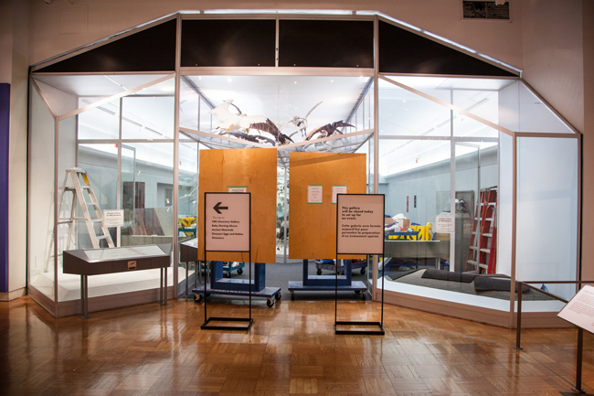 The Gallery of Birds on the 2nd floor of the ROM all set for the installation of Empty Skies: the Passenger Pigeon Legacy exhibit opening Saturday August 23.