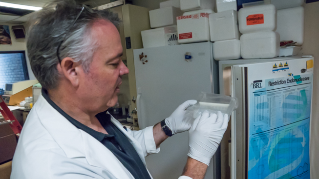 Oliver Haddrath shows us blue whale tissue sample stored in the short term freezer. Photo by Connor McDowell