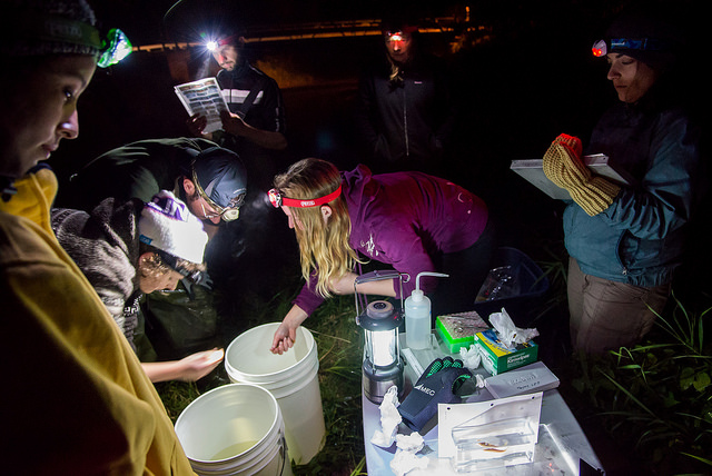 Viviana and the other members of the Ontario BioBlitz fish team survey well into the night - capturing and identifying species by the glow of headlamps and flashlights. Photo by Felipe Villegas