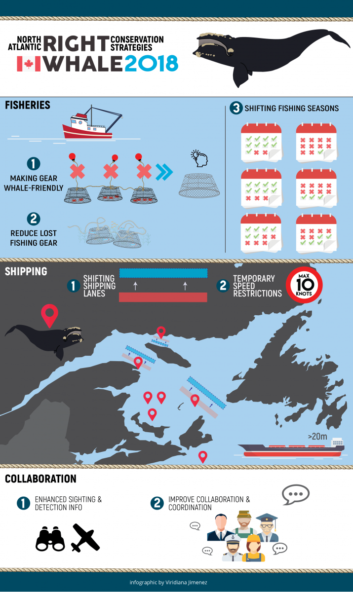 2018 right whale conservation strategies infographic