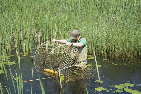 Lifting a net in the swamp