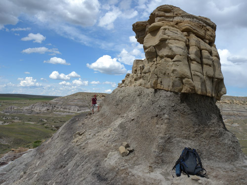 The discovery site of Acrotholus in the Milk River Formation of southern Alberta. Photo: Dr. David Evans, © ROM