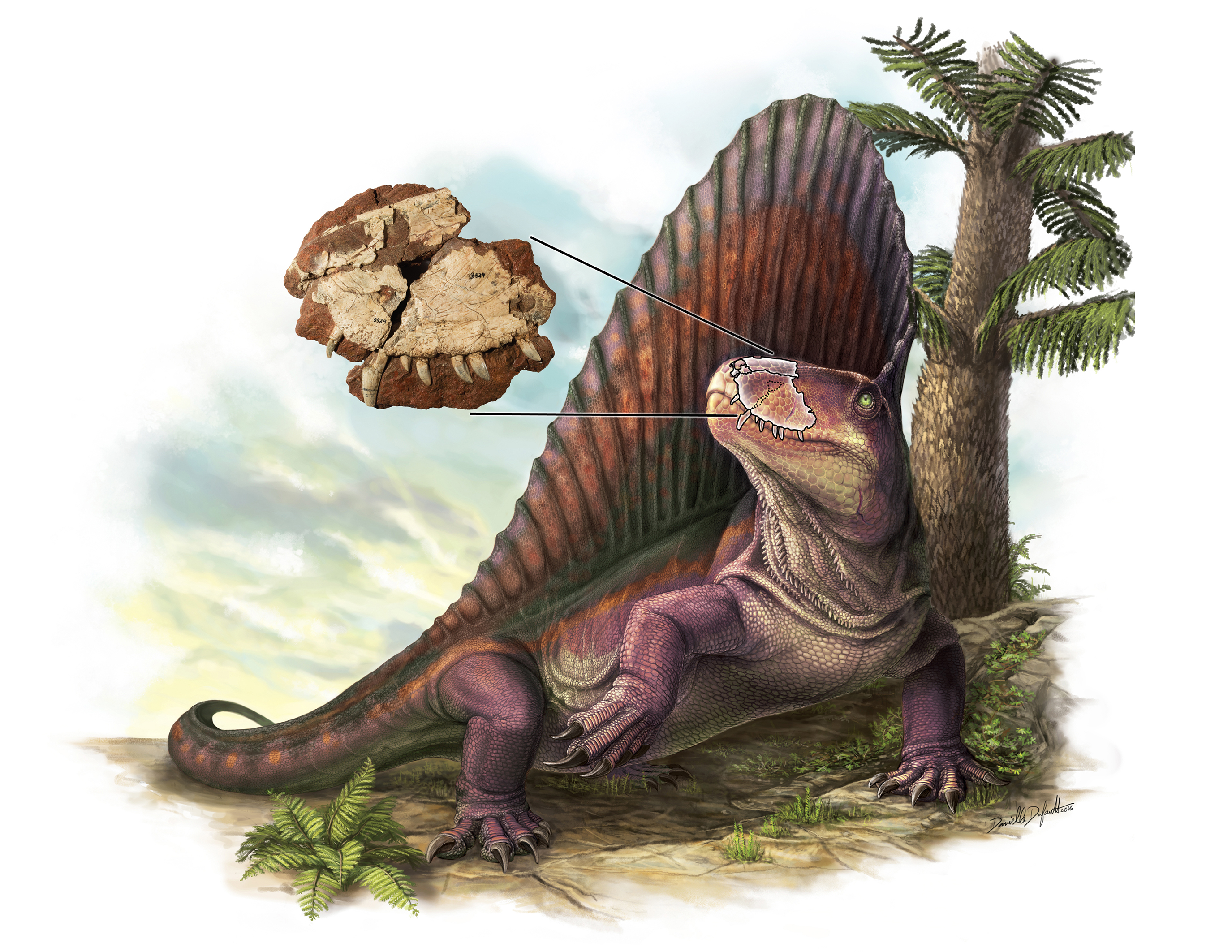 Dimetrodon_ROM2017_15552_2_11 pieces of Paleoart that bring the past back to life! Royal Ontario Museum.