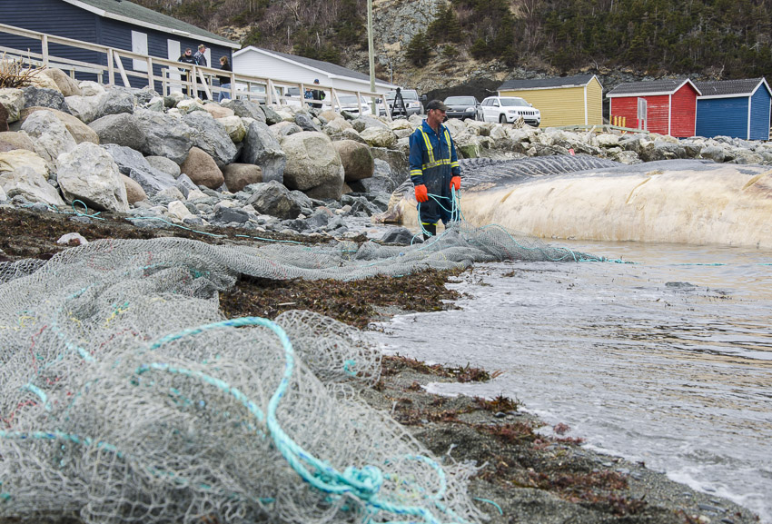 A man stands near the whale carcass holding a net.