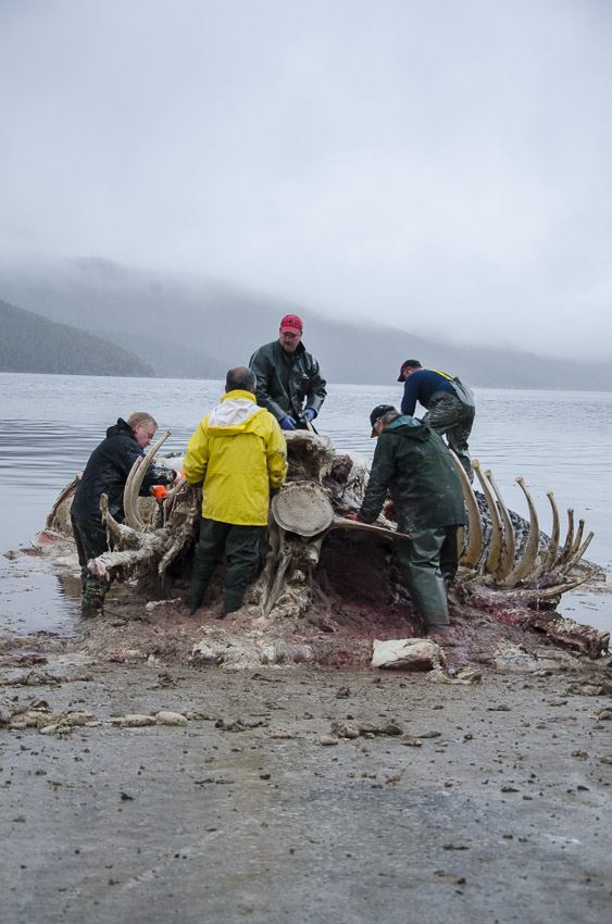 Five people in rain suits work on the whale carcass in the rain.