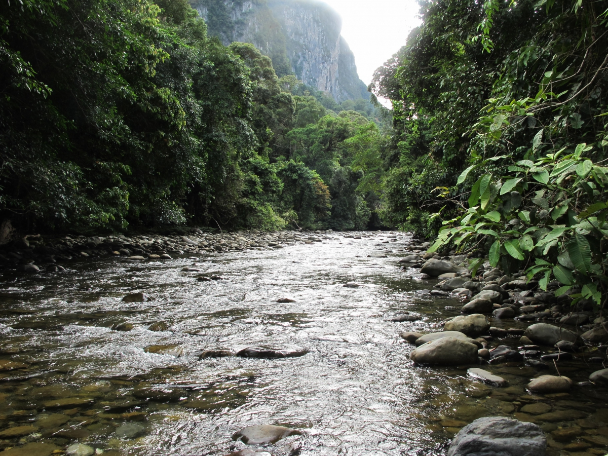 Gunung Mulu National Park, in the Heart of Borneo (Photo: Chris Darling)