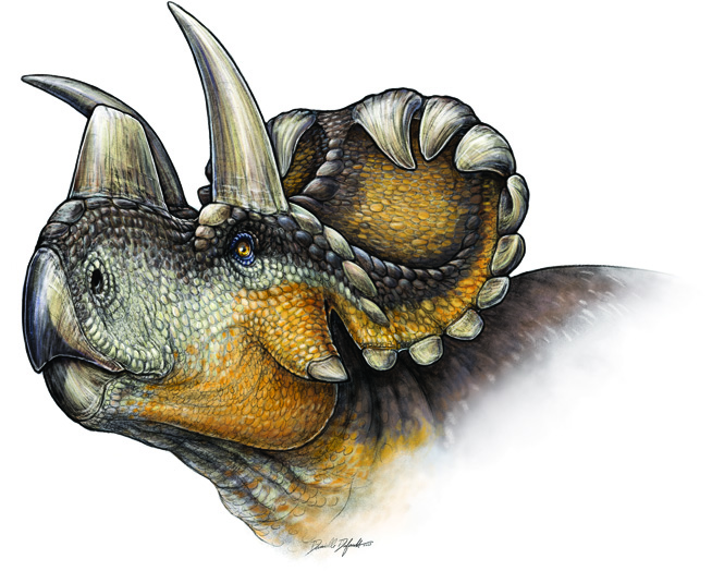 An artist's rendition of the Wendiceratops facial details