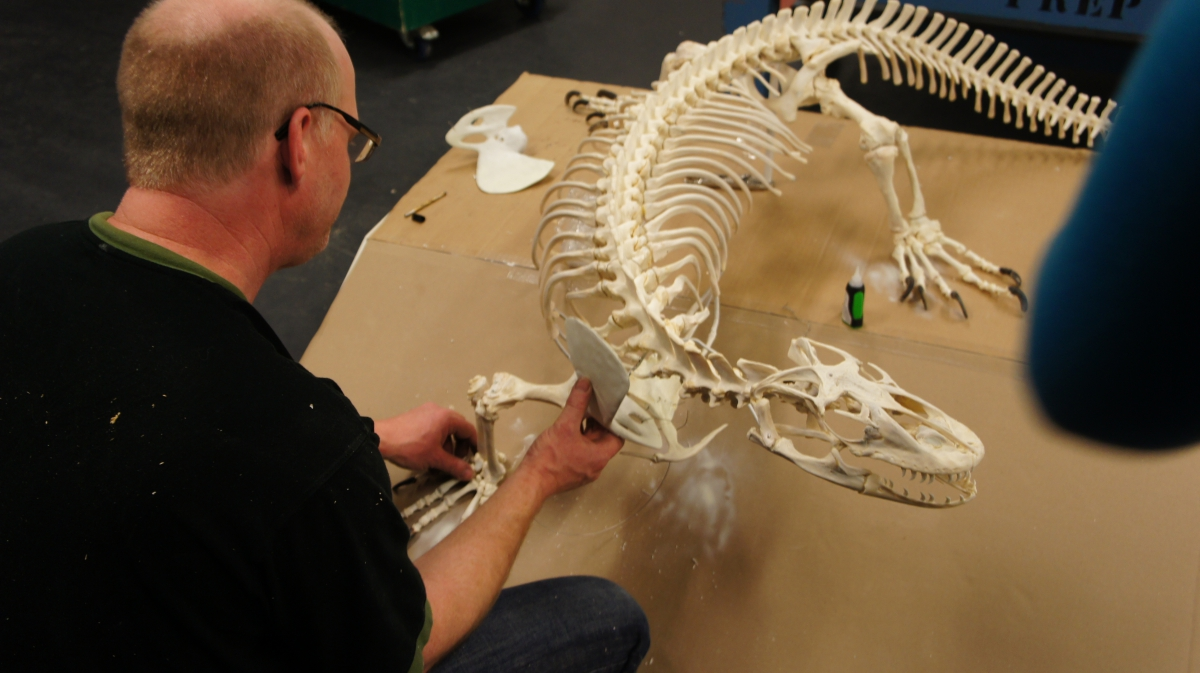 A taxidermist stands in front of the nearly complete Komodo Dragon skeleton