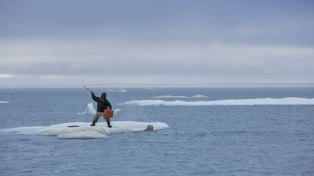 "Climate and culture come together in Ian Mauro's photo ""1000 Years Ago Today"", showing Inuk elder Lukie Airut hunting walrus in the Canadian Arctic, a region warming double the global average © Ian Mauro, 2013"