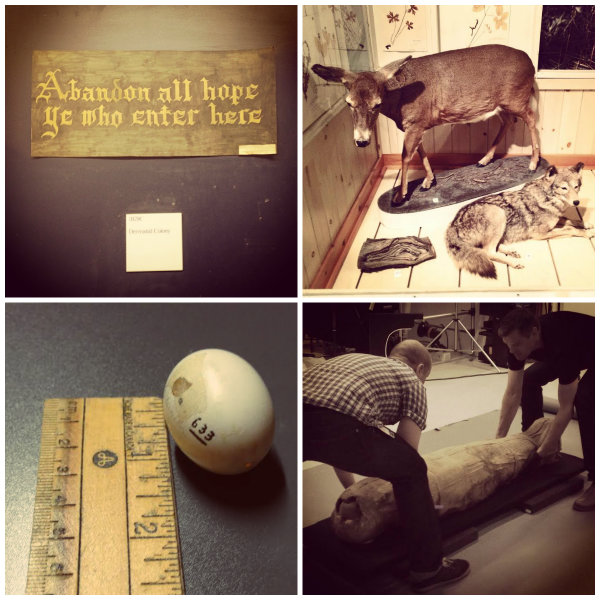 Warning sign on the bug room door, woodland animals in a gallery, carrier pigeon egg, and mummy in the photography studio. All photos by Jaime Clifton-Ross