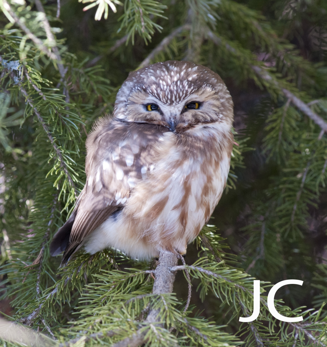 birds in your backyard by guest and rom biodiversity friend jill