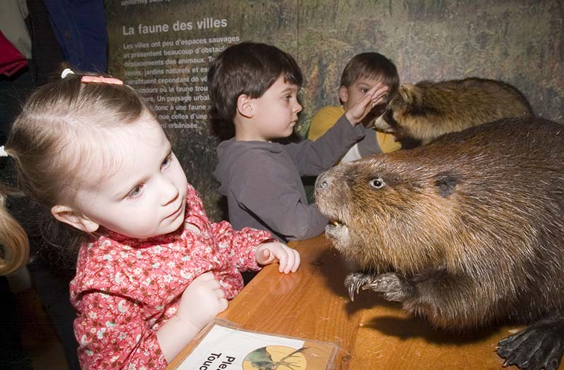 Kids looking at Beavers at the ROM