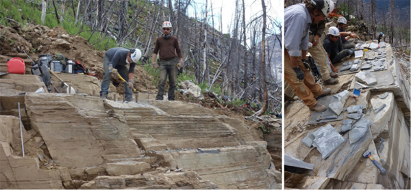 Author Karma Nanglu and Dr. Cédric Aria excavating fossils from the Marble Canyon quarry