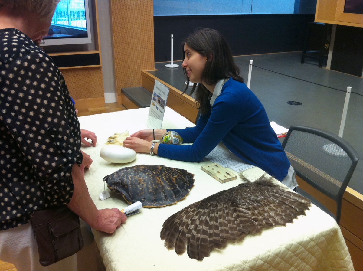 ROM volunteer teaching visitors about different migratory animals