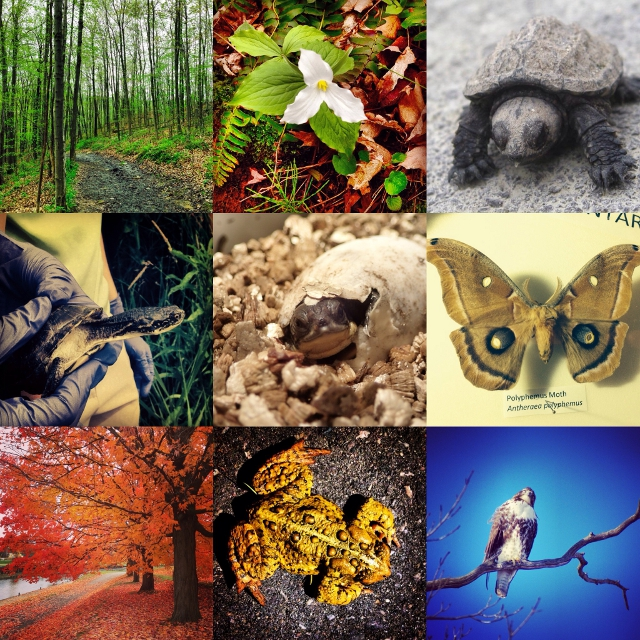 A collage of some of the plants and animals that are found and protected within Rouge National Urban Park. Images by Parks Canada / Toronto Zoo