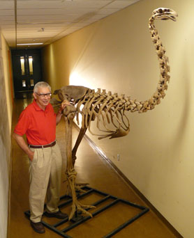 Allan and a giant moa  skeleton