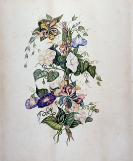 """Morning Glory and Honeysuckle"" Susanna Moodie Watercolour on card paper, circa 1869 ROM989.302.2 Gift of Mrs. Grace E. Moogk"