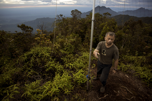 Burton Lim, the team mammalogist, sampling bats atop the mountain.