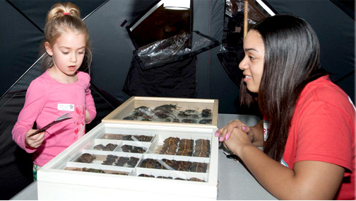Volunteer looks on as child studies specimens.