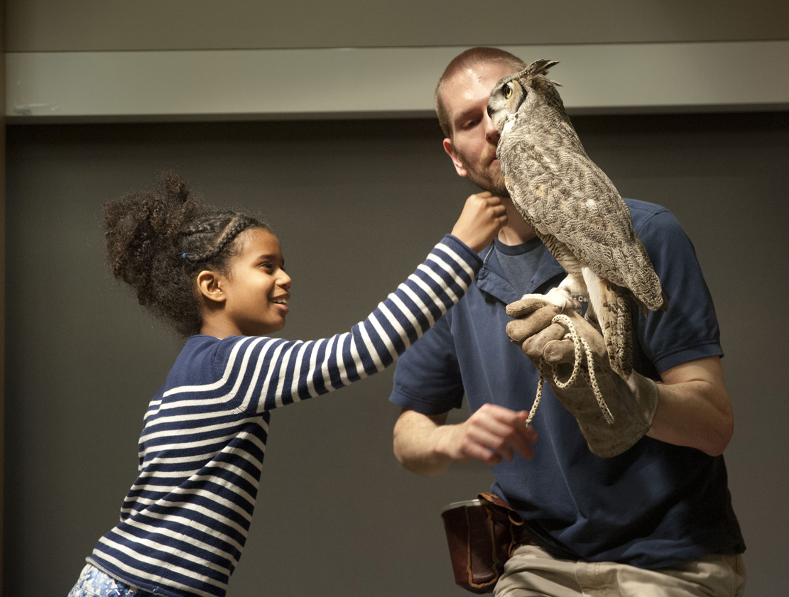 A young girl gently pets the breast of a Great Horned Owl