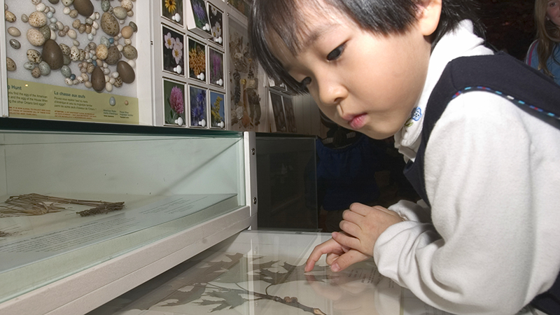 Child explores an interactive display in the Hands-on Gallery