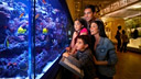 Family looking into the live coral reef aquarium inside the Schad Gallery of Biodiversity.