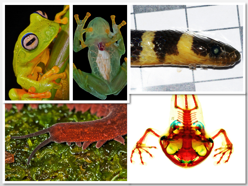 A collage of wildlife images, including frogs, snakes and velvet worms.