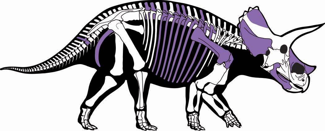 Triceratops Dig 2014 Recap Royal Ontario Museum