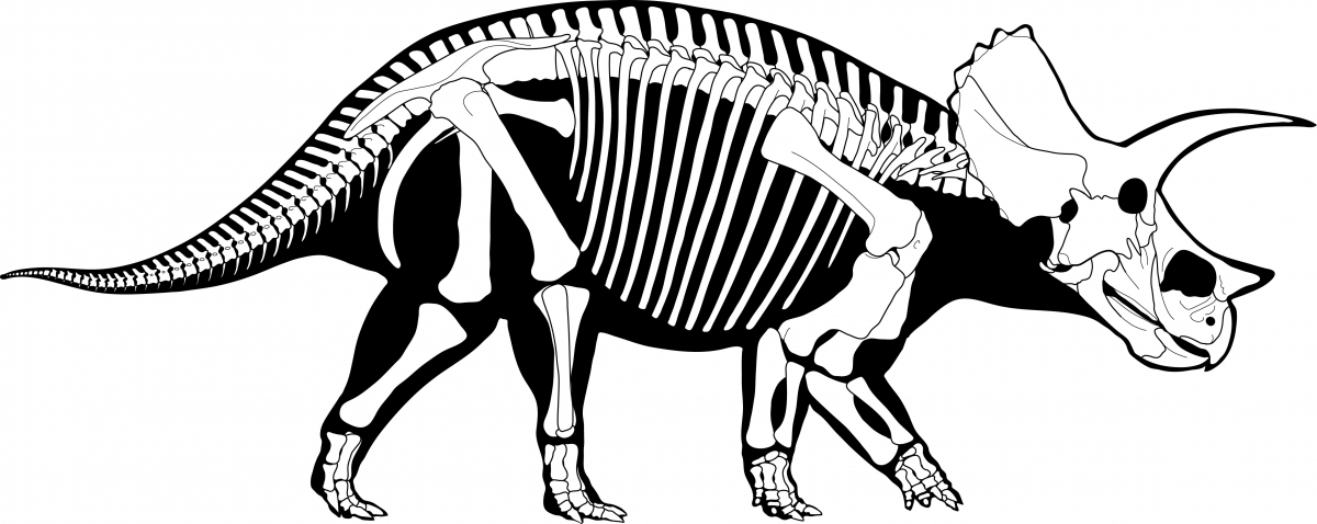A skeleton diagram of a Triceratops. Drawing by Danielle Dufault (@MesozoicMuse)