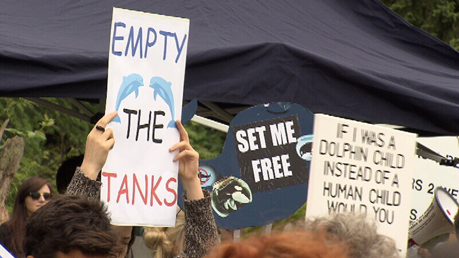 Protests outside the Vancouver Aquarium (Credit: CTV)