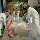 ROM research technicians wrap the blue whale heart in plastic.
