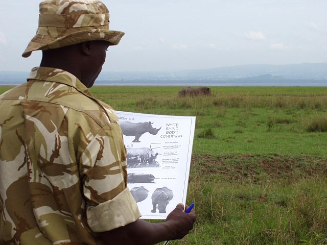 A man looks at a visual guide to rhino health, with a rhino visible in the distance, in a wildlife preserve