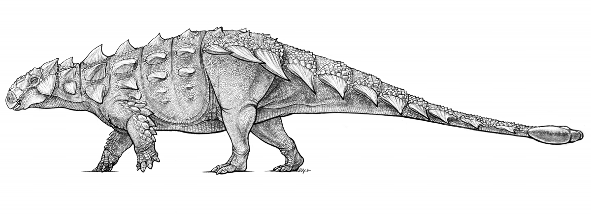 Black and white illustration of an armoured Dinosaur