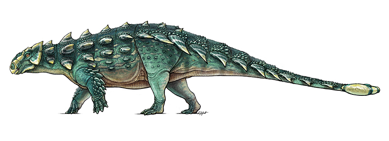 A colour illustration of a long, thin dinosaur with green, armoured skin
