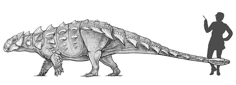 An illustration comparing Zuul's size to that of an adult woman