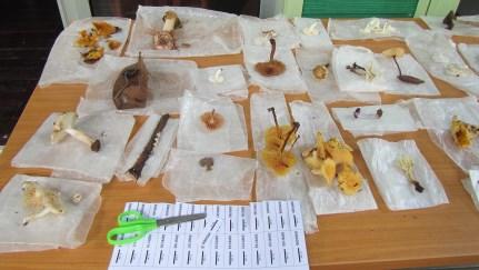 Mushrooms, Borneo