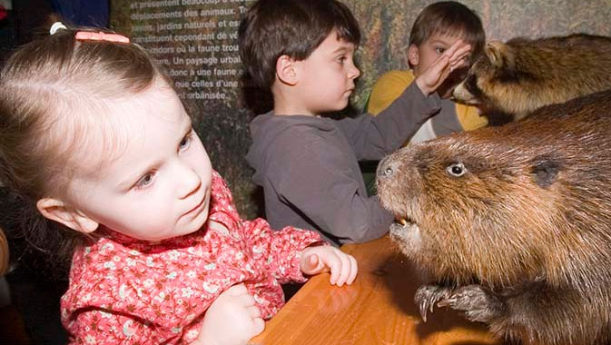Learn about local animals.