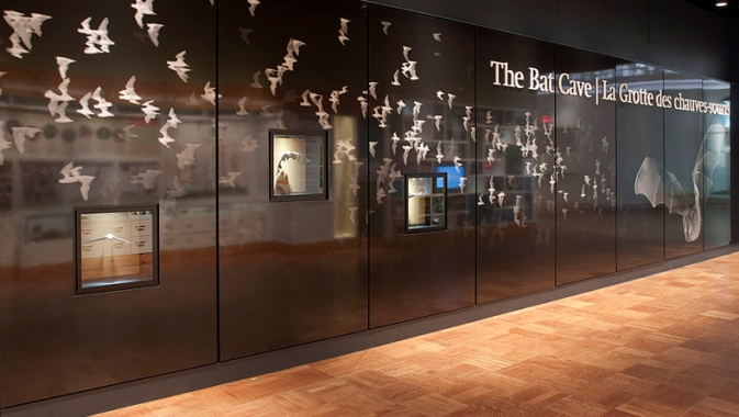 The ROM's Bat Cave hosts over 800 specimens and models of bats.
