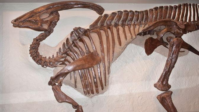 Galeries James et Louise Temerty de l'âge des dinosaures