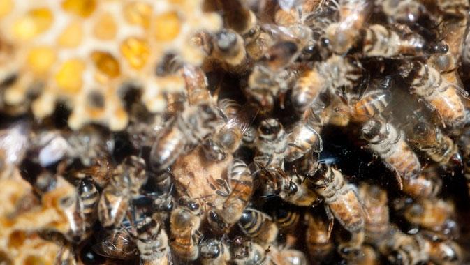 Une ruche en pleine activité