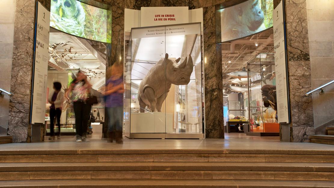 La vie en péril : Galerie Schad de la biodiversité
